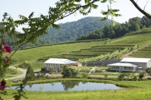 DelFosse Vineyards photo