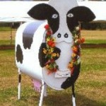 Nelson Farmers Market Nelly May cow image